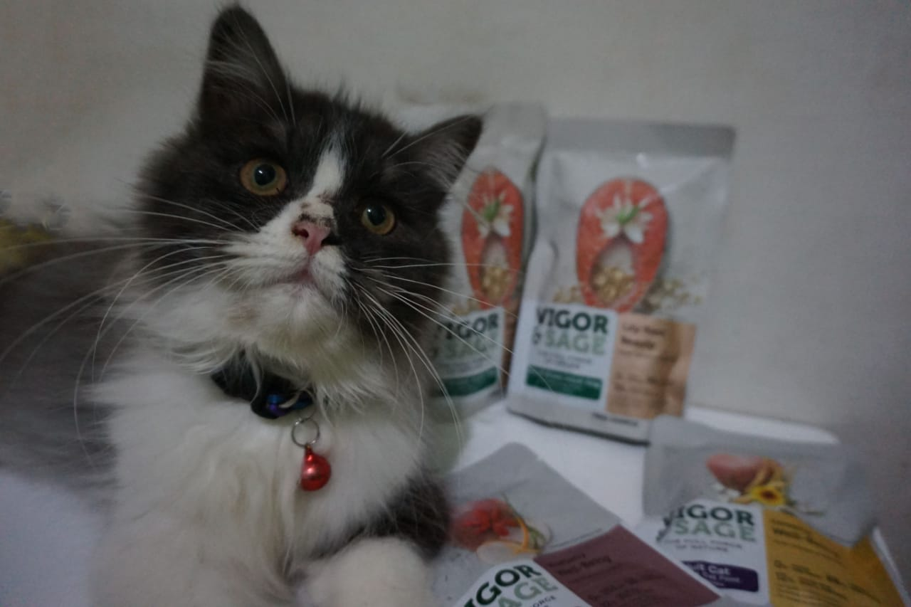 PET FOOD HERBAL UNTUK KUCING
