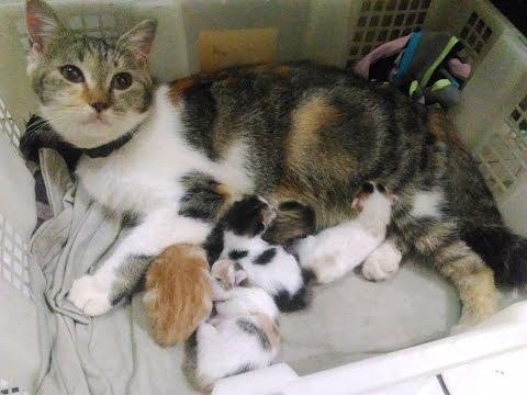 Apabila kucing melahirkan tidak tuntas