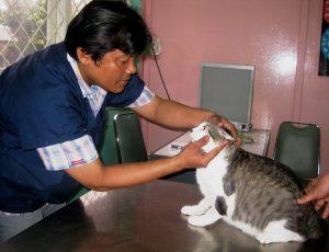 Drh. Husnul Hamdi dari RSH Jakarta memeriksa kesehatan kucing