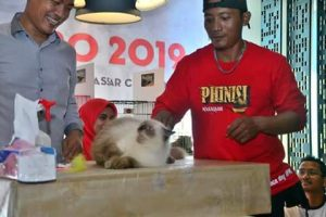 IPK Makassar Gelar Cat Expo 2019