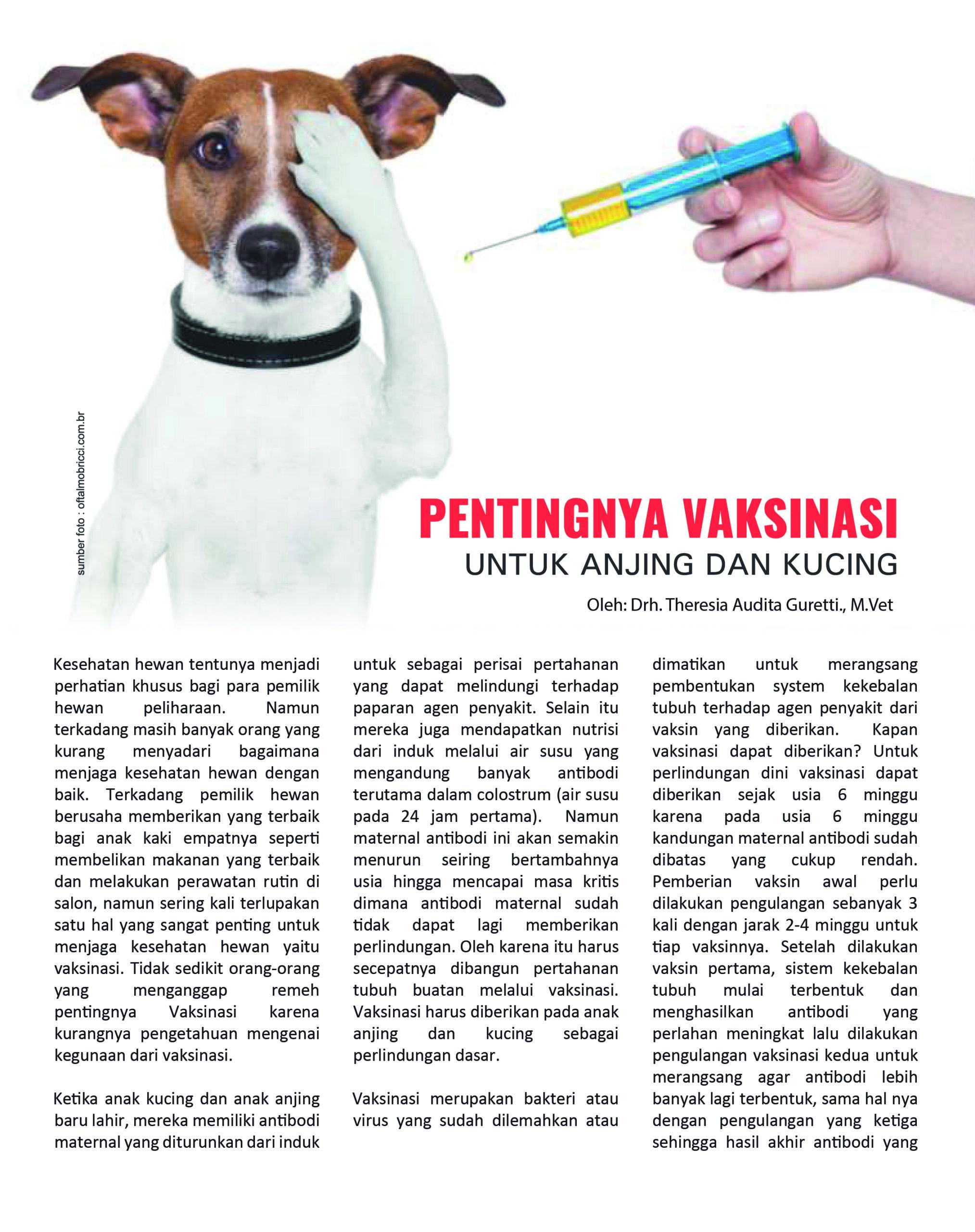 Vaksinasi bagi hewan peliharaan, anjing dan kucing