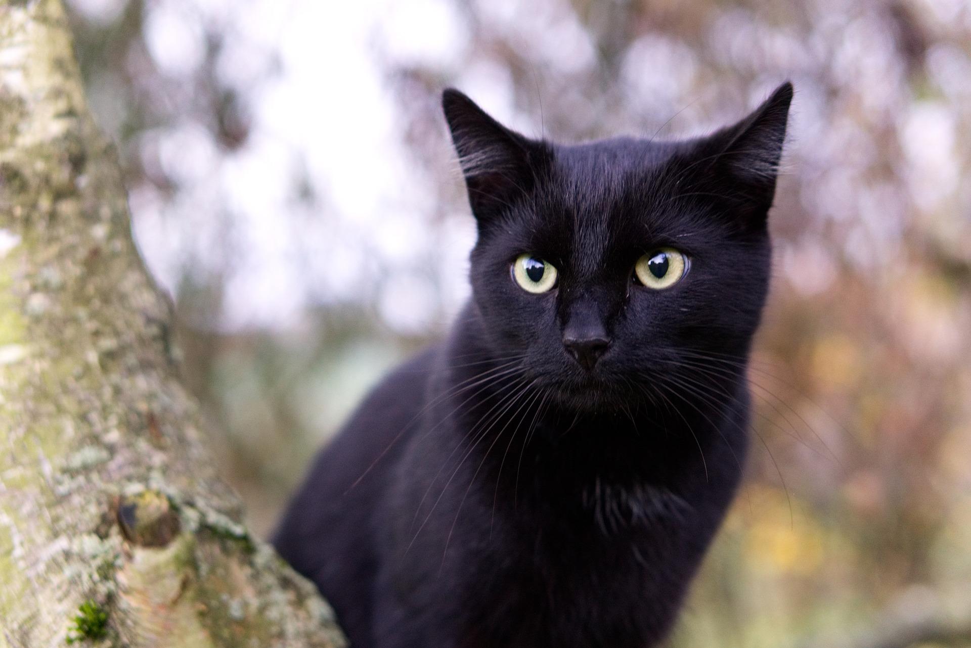 Misteri Si Kucing Hitam!