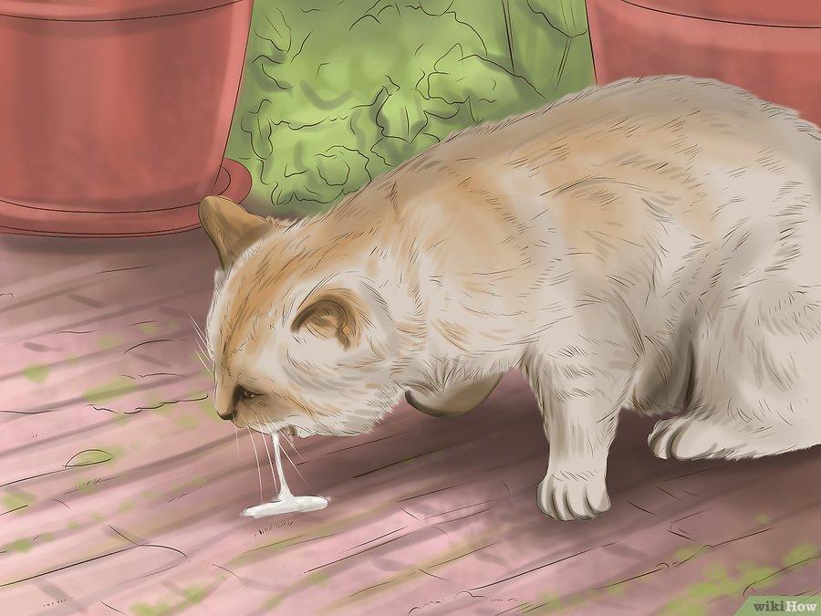Menolong Kucing Yang Keracunan