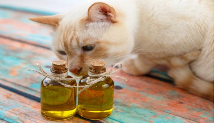 Cara Mengalihkan Kucing Agar Mengunyah Benda Berbahaya (Trubus.id)