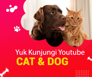 Youtube Cat & Dog