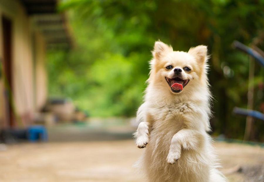 Gambar anjing bahagia