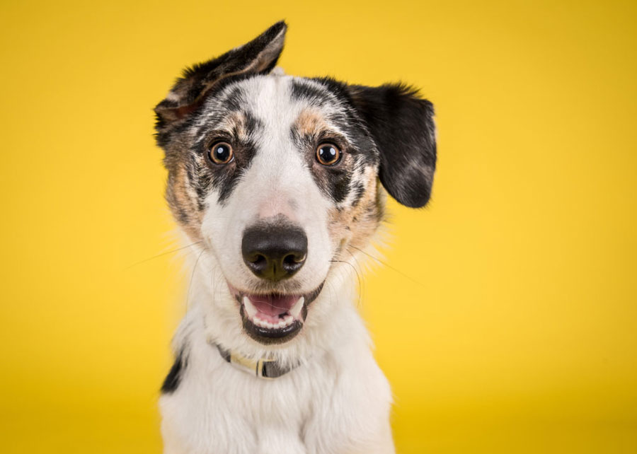 Gambar anjing