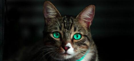 Vitamin manusia untuk kucing