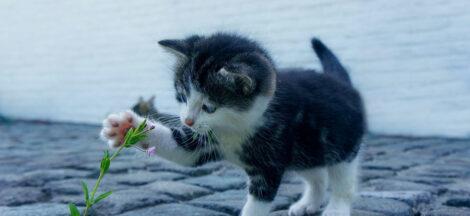 Anak kucing baru lahir boleh dipegang