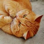 Cara agar kucing nurut