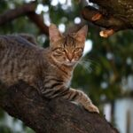 Kucing suka memanjat pohon