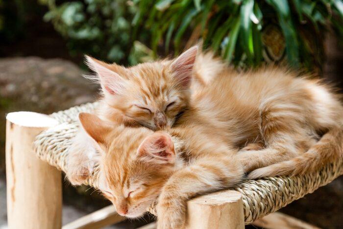 Kenapa kucing sering tidur